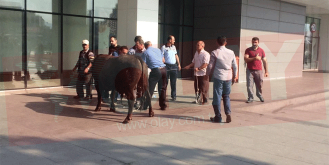 Bursa'da kaçan boğa AVM'ye sığındı