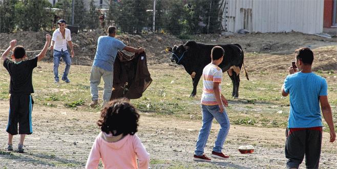 Bursa'da matadorları aratmayan görüntüler