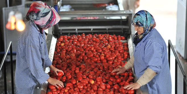 Bursa'da domatesin salçaya yolculuğu başladı