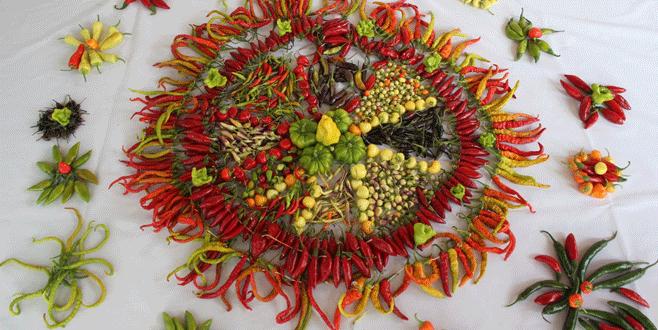 60 çeşit biberden tohum elde edildi