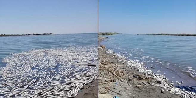 Korkutan gelişme! Çok sayıda ölü balık sahile vurdu
