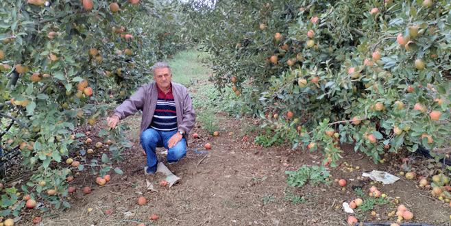 Elma üreticisi umduğunu bulamadı