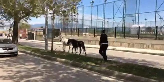 Bursa'da polisin sahipsiz at mesaisi