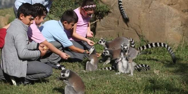 Öğrenciler hayvanat bahçesine akın etti