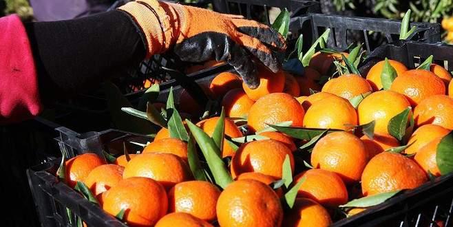 Meyve sebze ihracatçılarında Rusya sevinci