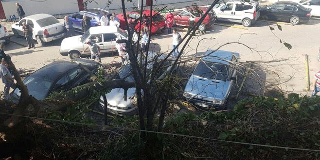 Bursa'da lodos ağaçları devirdi