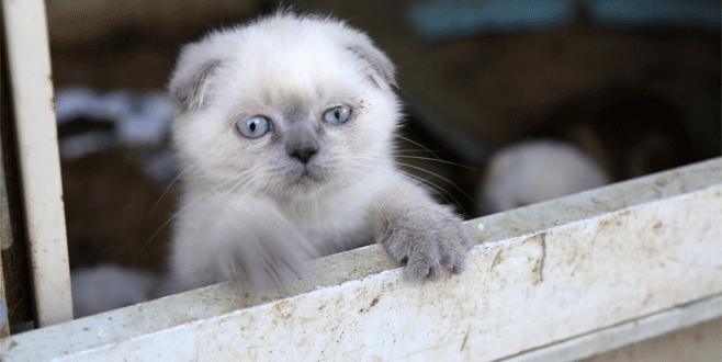 Kediler açık artırmayla satılacak