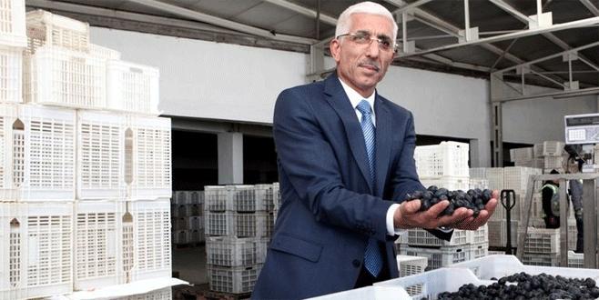 Zeytinde sorunlar Ankara'ya taşınacak