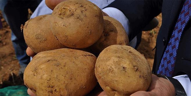 Milli patatesler dışa bağımlılığı bitirecek