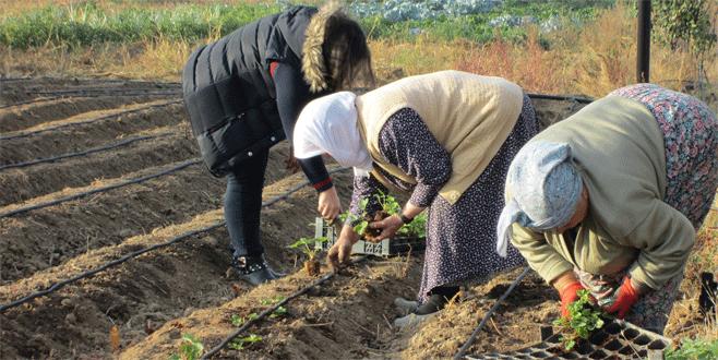 Büyükorhanlı çiftçiye tarımsal yenilik projesi