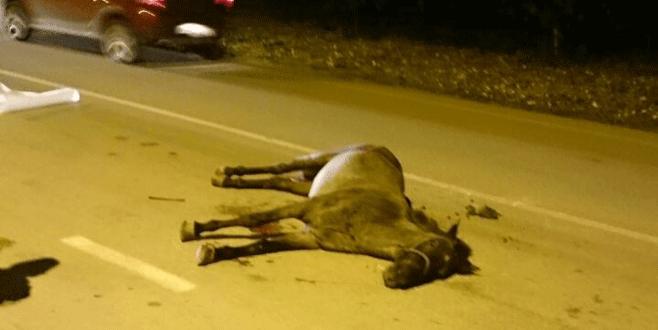 Bursa'da başı boş at kazaya neden oldu