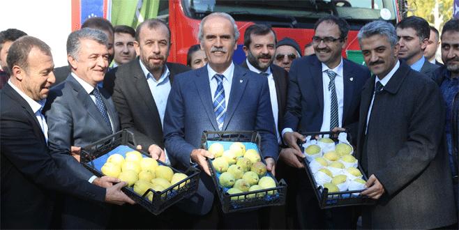 Bursa'dan Hollanda'ya armut ve ayva ihracatı başladı