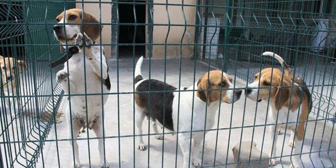 İnegöl'de 128 sokak hayvanı sahiplendirildi