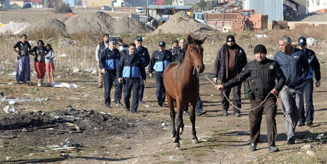 Bursa'da sahipsiz at ve baraka operasyonu
