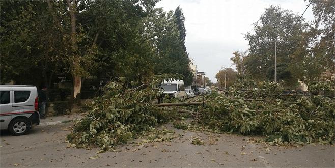Bursa'da fırtına ağaçları devirdi