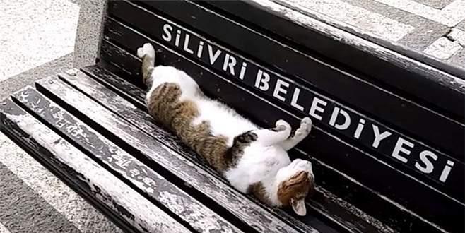 Dikkat 'Rıfkı' uyuyor