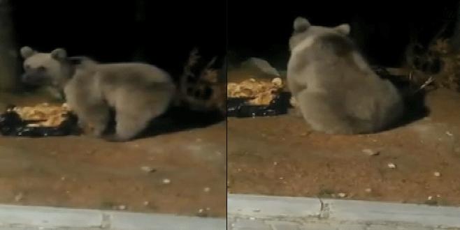 Bursalı dağcılar ayıları Uludağ'da elleriyle besledi