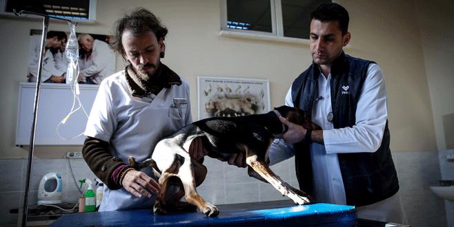 5 ayaklı köpek Bursa'da ameliyat edildi