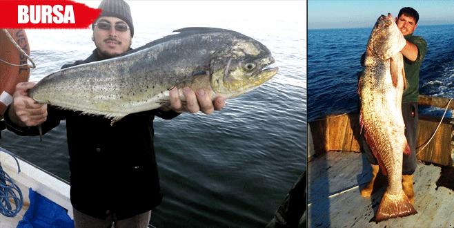 Marmara'da bir ilk! Balıkçılar da şok oldu…