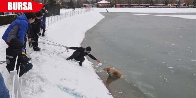 Buz tutan gölete düşen köpeği kurtarma seferberliği