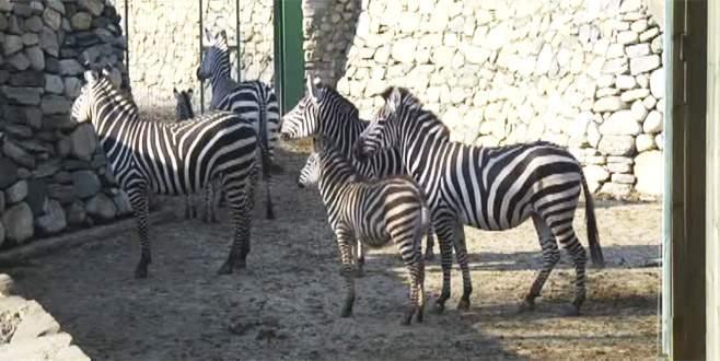 Bursa Hayvanat Bahçesi'nde doğum mutluluğu