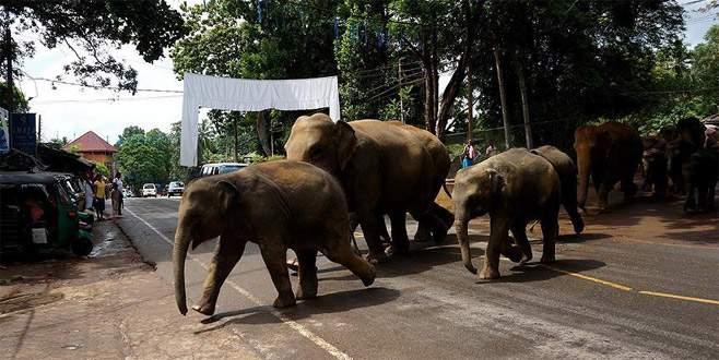 Fil sürüsü köye saldırdı