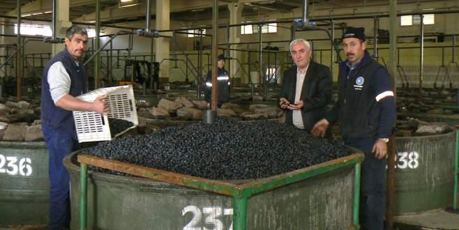 Orhangazili zeytincilere 8 milyon 230 bin TL ödendi