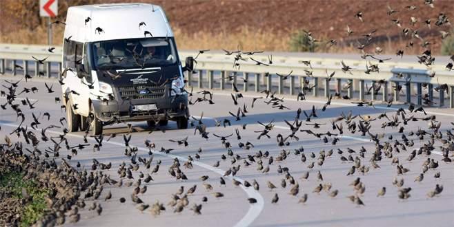 Soğuk onları da vurdu, binlercesi kara yolunu kapattı…