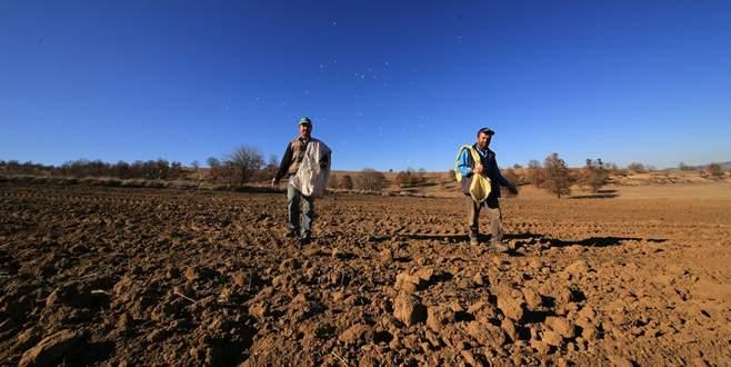 Büyükorhan'da siyez buğdayı üretilecek