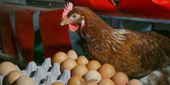 Yumurta ve tavuk zamlandı