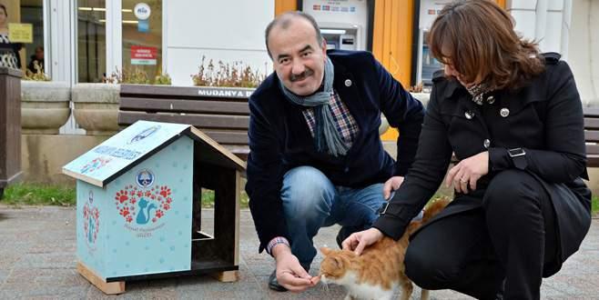 Belediyeden kedi evi