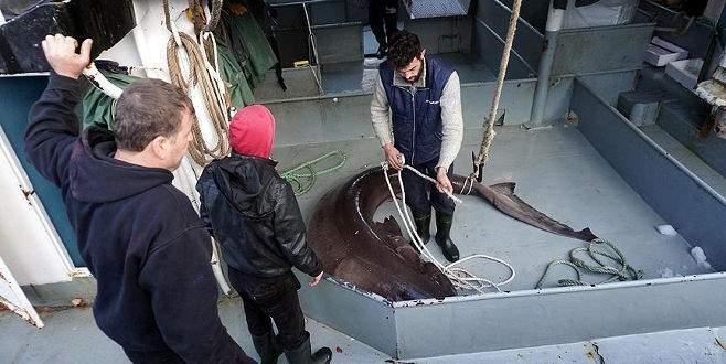 Çinekopa ağ atan balıkçılar köpek balığı yakaladı