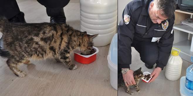 Bursa'da donmak üzere olan kediye polisler sahip çıktı
