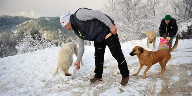 Uludağ'daki aç hayvanlara yiyecek bırakıldı