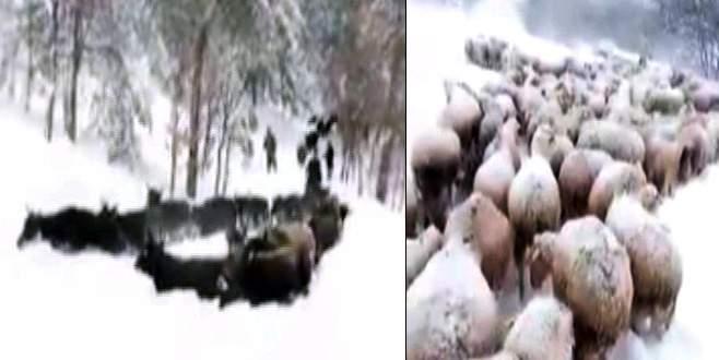 Bursa'da yayla yolu kapandı! Çoban 1 haftadır mahsur…
