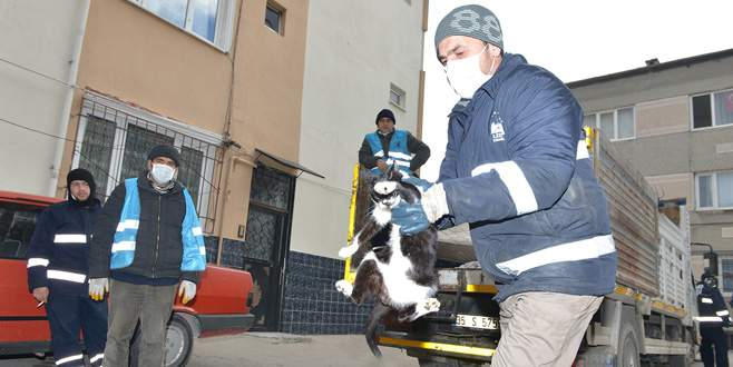 Baruthane'de kedi operasyonu