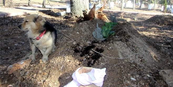 Vefakâr köpek, her gün ölen sahibinin mezarına gidiyor