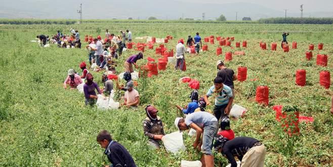 Uzmanlardan çiftçiye dönüşümlü tarım uyarısı