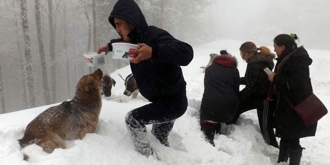 Karda sokak hayvanlarına sıcak yardım eli
