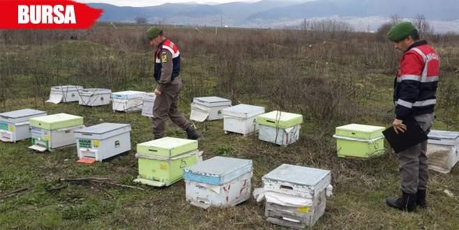 60 bal arısı kovanı çalan kişi yakalandı