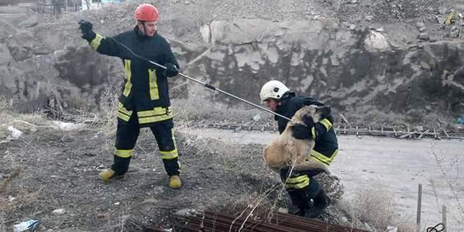 İnşaat demirleri arasına sıkışan köpek kurtarıldı