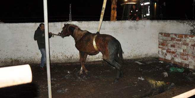 Foseptiğe düşen atı itfaiye kurtardı