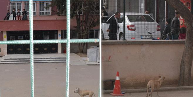 Bursa'da çocukların pitbull korkusu!
