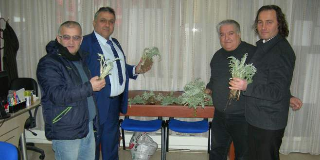 Mudanya'da 10 bin adet enginar fidesi dağıtılacak