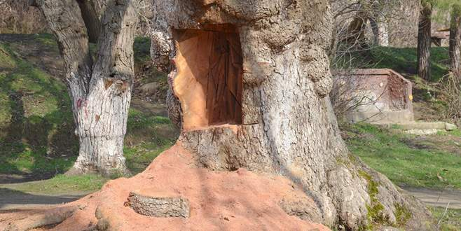 400 yıllık çınar ağacını testereyle oydular