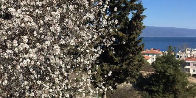 Bursa'da güneşi gören ağaçlar çiçek açtı