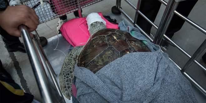 Deniz kaplumbağasının midesinden 915 bozuk para çıktı