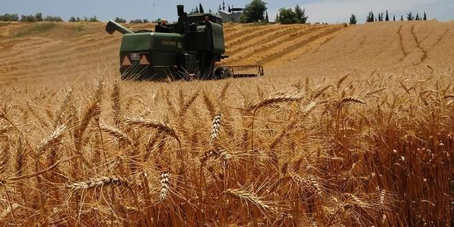 Buğdaydaki 'tarım ilacı' tartışmalarına açıklama