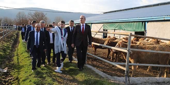 Büyükşehir desteğiyle dağ yöresinde hayvancılık gelişiyor
