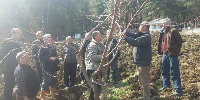 Çiftçilere ağaç budama kursu